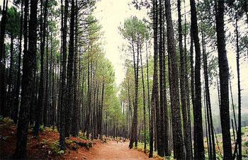 Bosque en Córcega