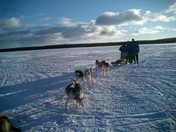 Trineo de perros en Kiruna
