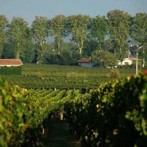 Viñas de Pomerol en Burdeos