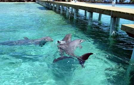 Delfines en Roatan