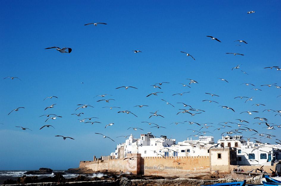 Fortaleza de Essaouira con gaviotas