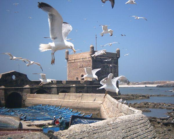 Puerto de los pescadores de Essaouira con gaviotas