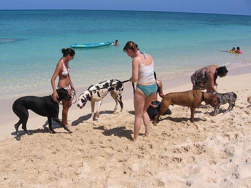 Perros y dueños en la playa de Ayia Napa @ Andie712b