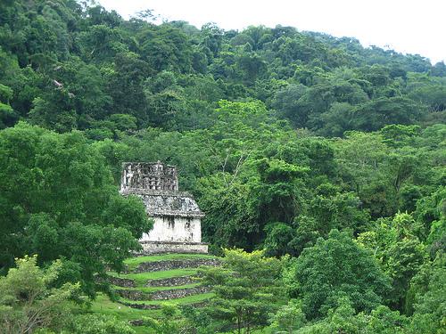 Pirámides enmedio de la selva de Palenque