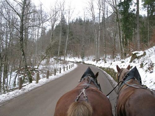 Subiendo al castillo de Neuschwanstein en un coche de caballos