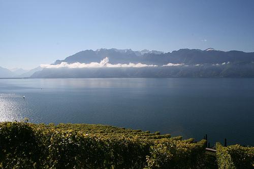 Viñedos en el lago Léman @Mclaire2 flickr