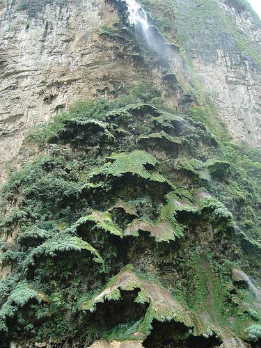 Árbol de Navidad del cañón del Sumidero