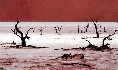 Árboles en el Namib Desert