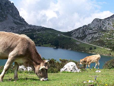 Lagos de Covadonga (Picos de Europa) @3viajes