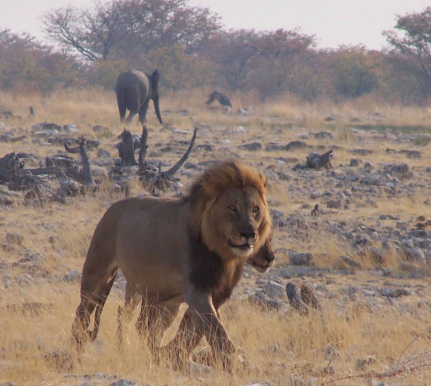 Safari en Etosha