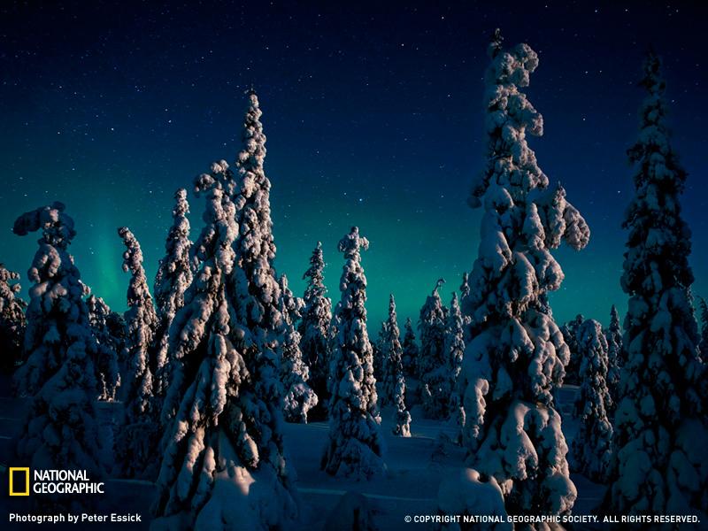 Aurora boreal en el parque nacional de Oulanka, Finlandia
