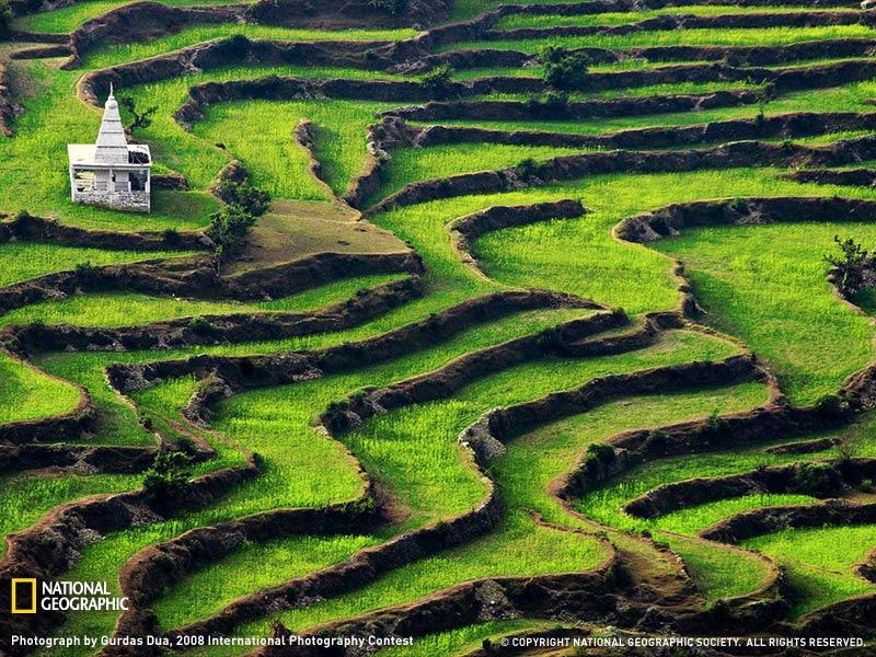 Terrazas de arroz de Ranikhet, Uttranchal, India