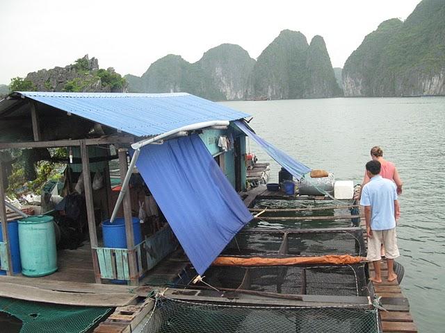 Comprando pescado en Halong Bay