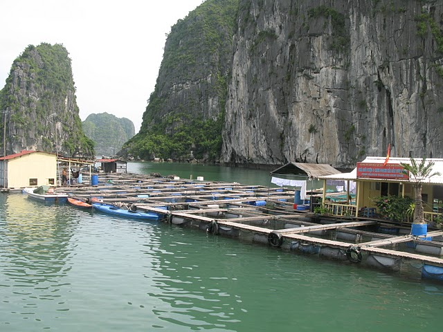 Poblado de pescadores flotante que fue dónde dormimos