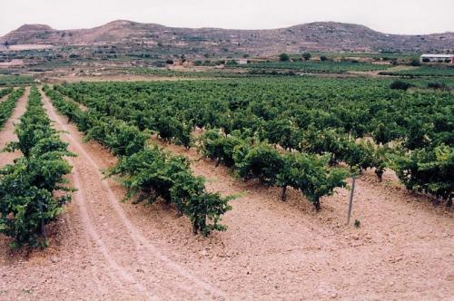 Viñedo de La Rioja