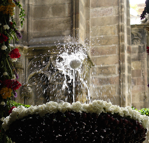 L'ou com balla en el claustro de la catedral de Barcelona