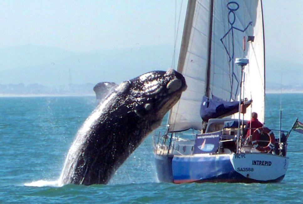 Ballena saltando el velero
