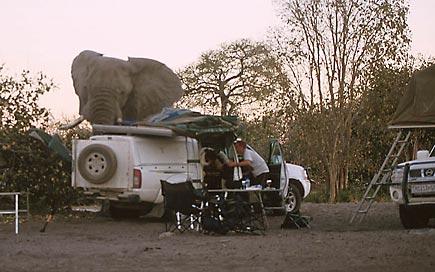 Elefante visitando un campamento en Namibia