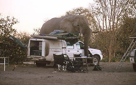 El elefante de marcha por el campamento en Namibia