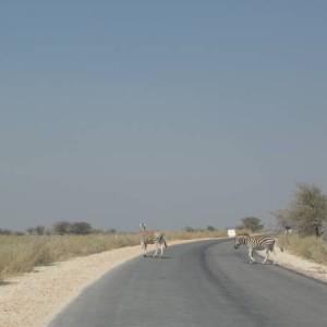 Desde el Etosha Park en Namibia