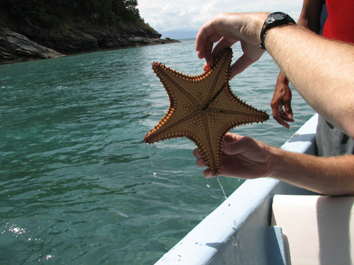 Estrella en el Mar Caribe de Honduras