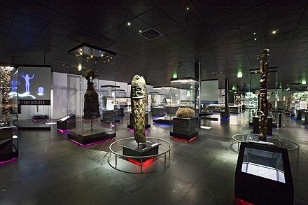 Etnología en el Museo de Historia Natural de Toulouse