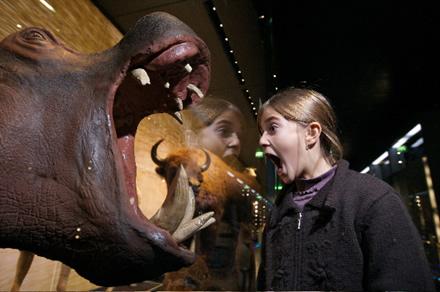 Hipopótamo disecado en el Museo de Historia Natural de Toulouse