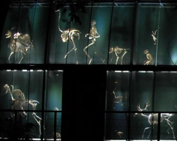 Muro de los Esqueletos desde el Jardín Botánico, de noche.