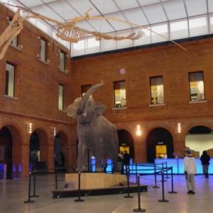 El Museo de Historia Natural de Toulouse