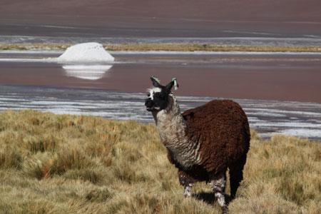 En la puna alta de Bolivia @3viajes