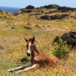 Los caballos viven en semi libertad en la isla