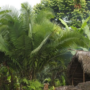 El Amazonas: un paraíso ilusorio