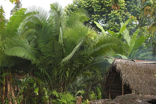 Casa tradicionales en el Amazonas colombiano