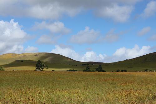 Rapa Nui, el misterio de la isla sin árboles (II)