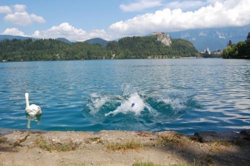 Un baño en el Lago Bled (2)