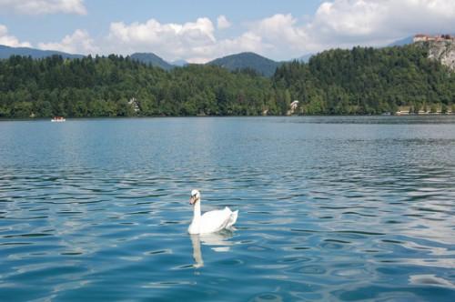 Un baño en el Lago Bled (3)
