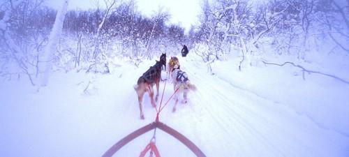 Safari en trineo de perros (foto:Trym Ivar Bergsmo /finnmark reiseliv)