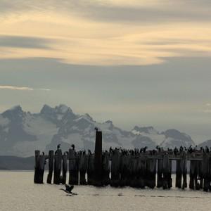 Cormoranes en la bahía de Puerto Natales