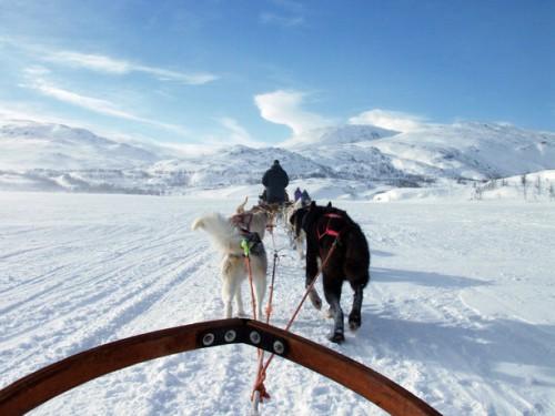 Trineo tirado por perros en Laponia @Sweden