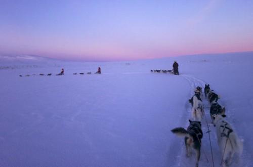 trineos_laponia_sueca_huskies