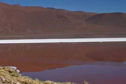 Laguna Colorada (Altiplano Bolivia)
