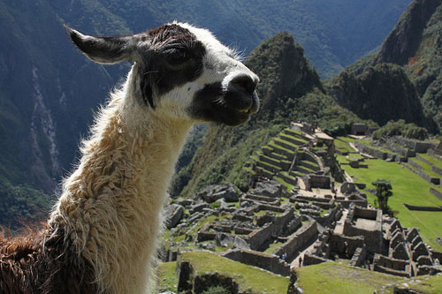 Actuales habitantes de Machu Picchu @3viajes