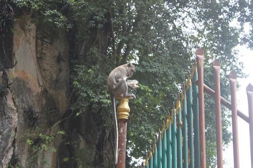Mono comiendo en las Batu Caves