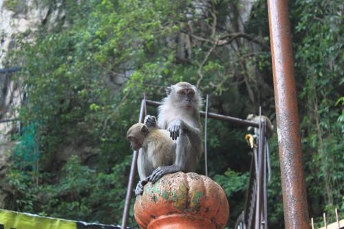 Los monos de las Batu Caves