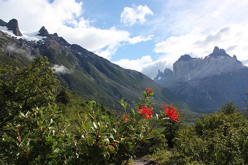 Flora patagónica durante el camino @3viajes