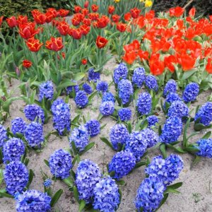 El desfile de las flores