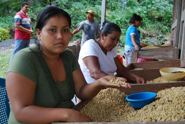 Trabajadoras del café en Finca Magdalena @MónicaHernández