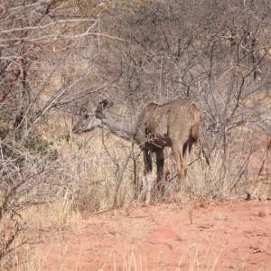 Waterberg Plateau de Namibia
