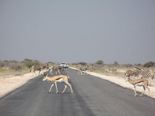 Carretera de Etosha Park