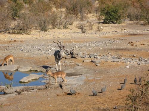 Waterhole de Halali en Etosha Park durante el día